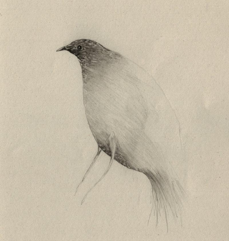 artist-andrew-smith05
