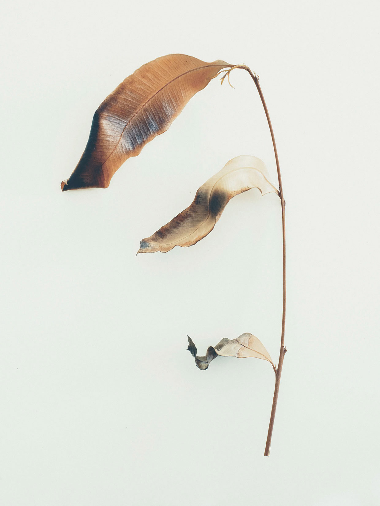 jared-fowler05