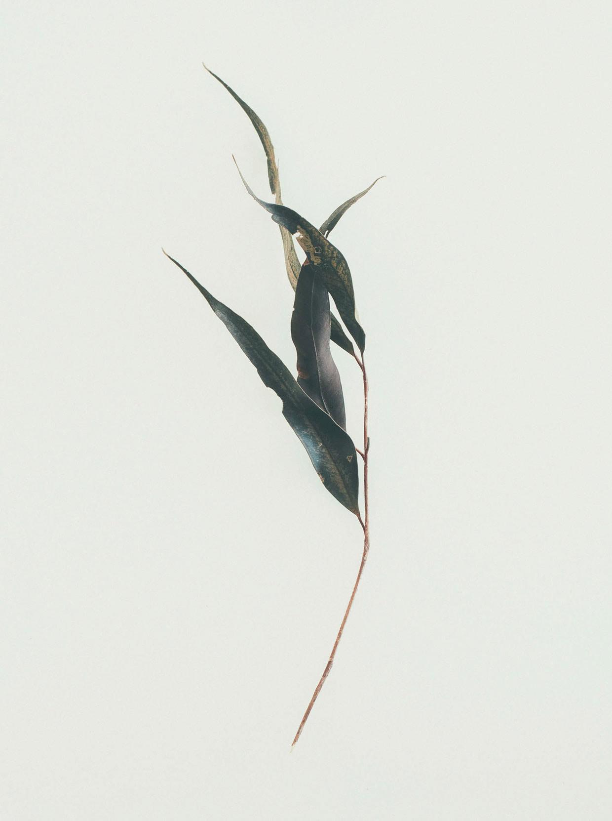 jared-fowler06