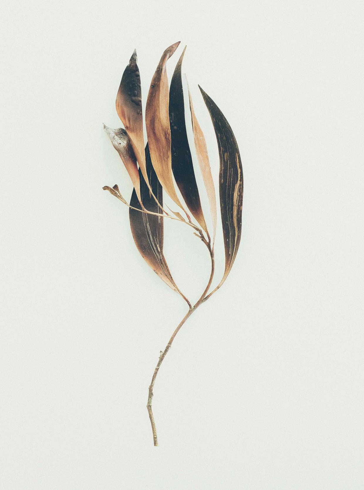 jared-fowler09