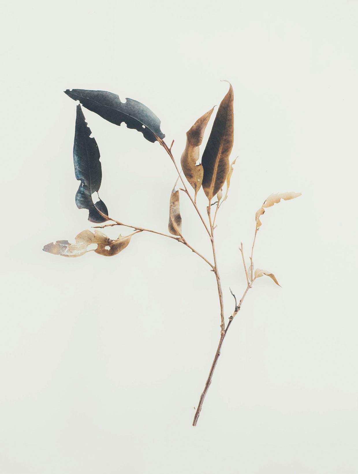 jared-fowler14
