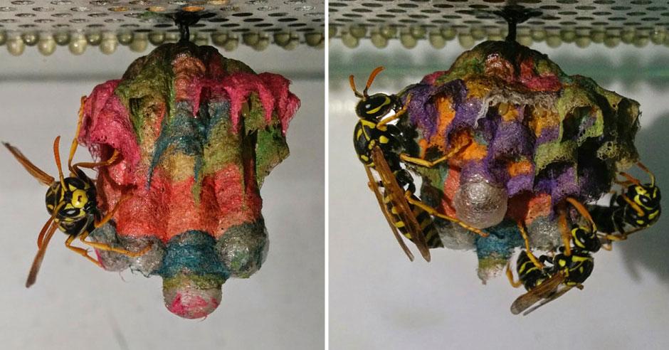 Mattia Menchetti Gives Wasps Coloured Paper To Create