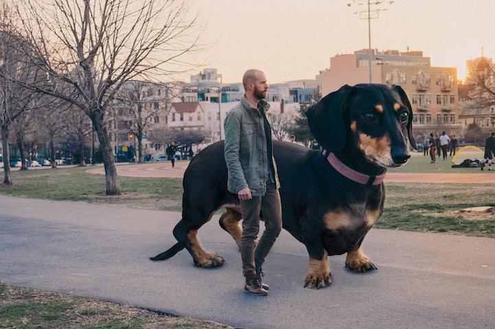 vivianthedog4