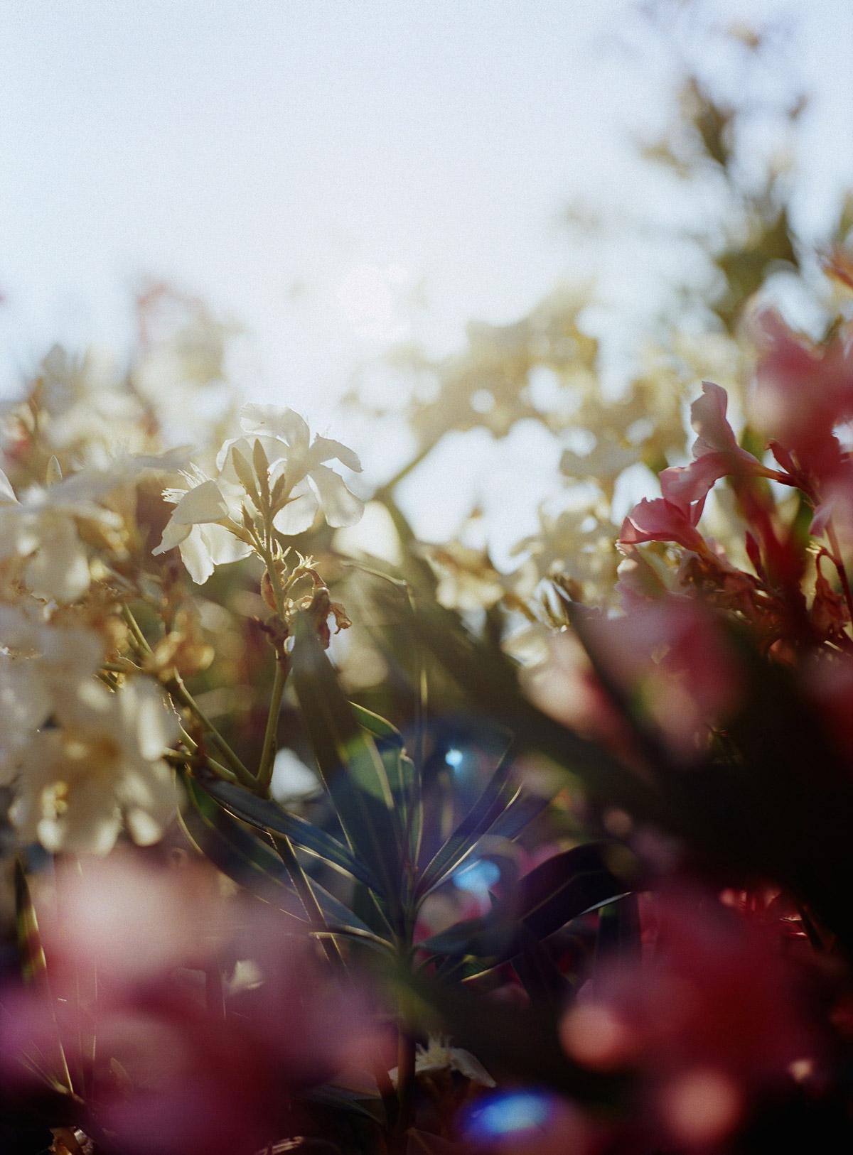 berrin6