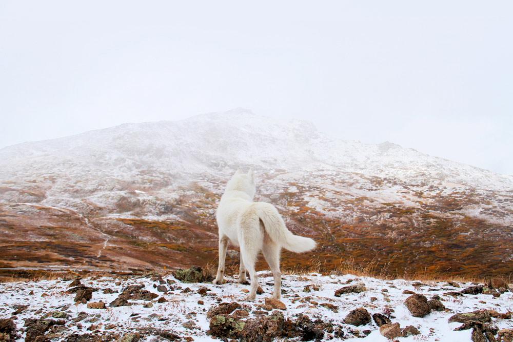 johnstortz-wolf14