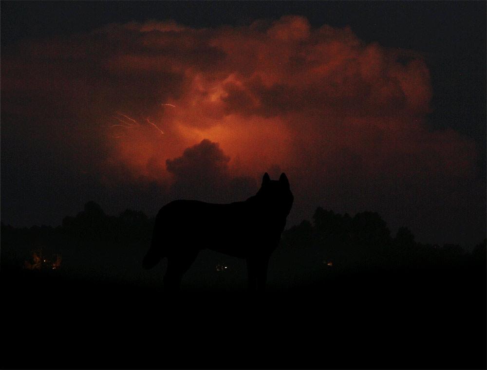 johnstortz-wolf15