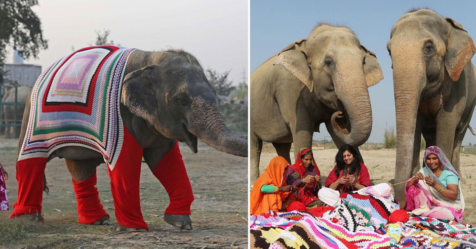 Knitting Jumpers For Elephants Fake : Villagers hand knit giant sweaters to help keep rescued