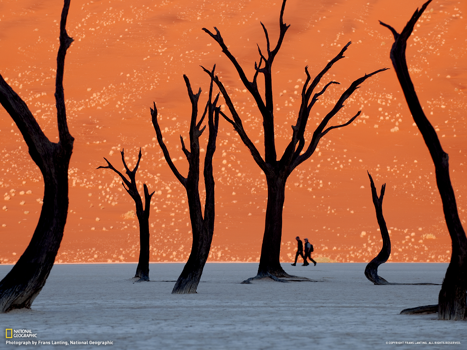 Photo of namib naukluft national park in namibia looks for Make a photo look like a painting