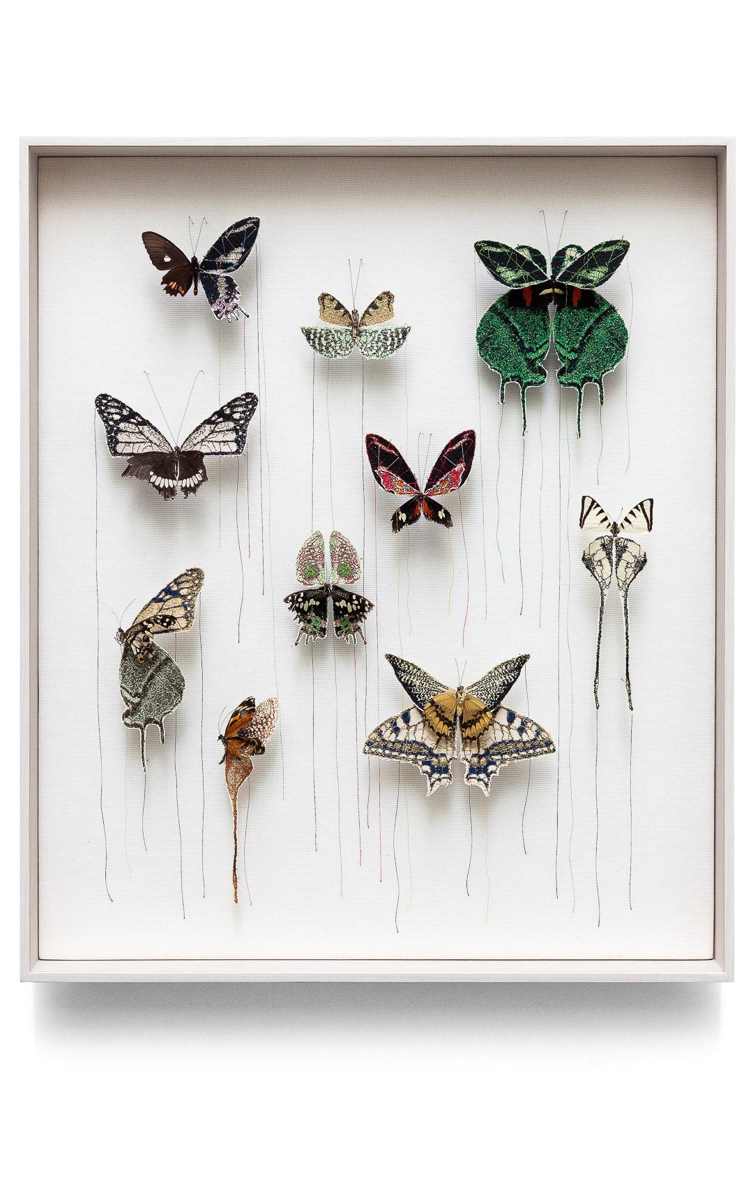 U201cbroken Butterflies U201d By Artist Anne Ten Donkelaar
